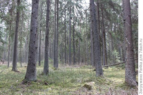 В лесу - тишина....