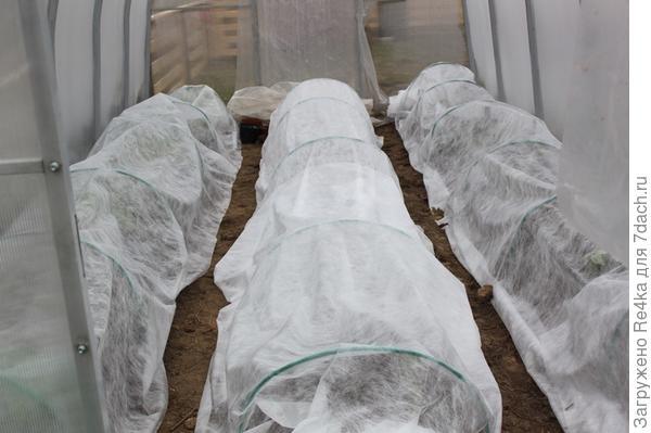 Высаженные и укрытые томаты 28-29 апреля.