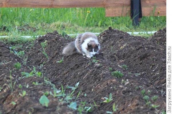 Хулиганьё на огороде. Опустила голову, когда её начали ругать.