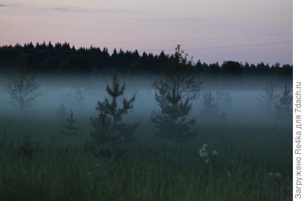 Холодные вечерние туманы.