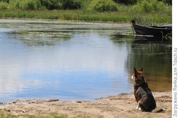 Встреться с собачкой, ожидающей своего хозяина с рыбалки.