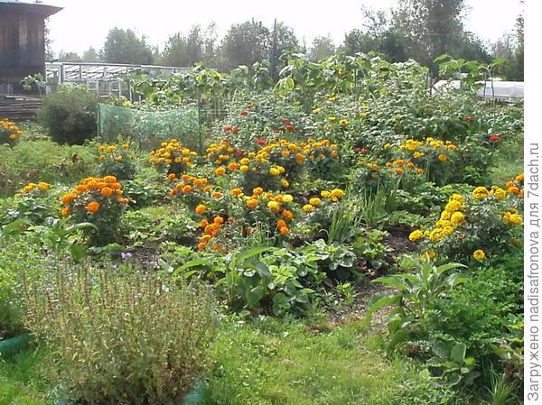 это мой огород осенью