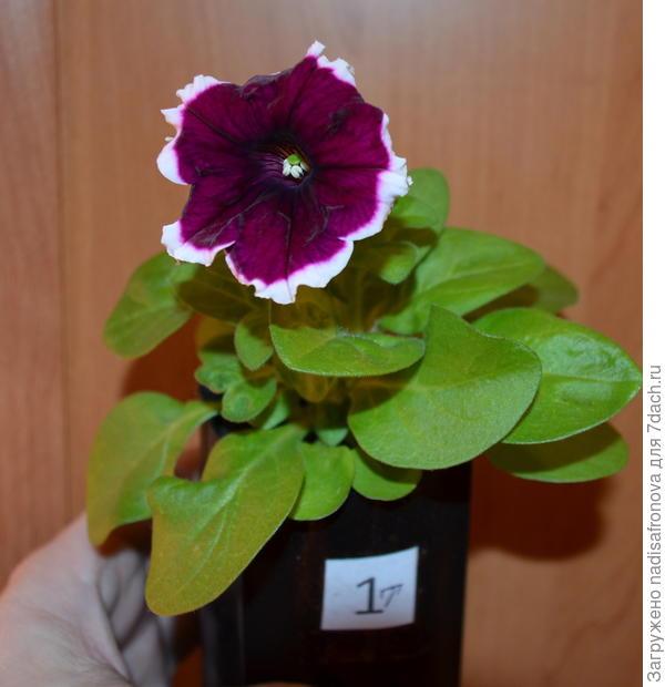 14 апреля 1-ый цветок