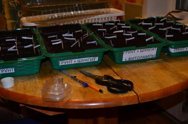 Перцы перед началом эксперимента