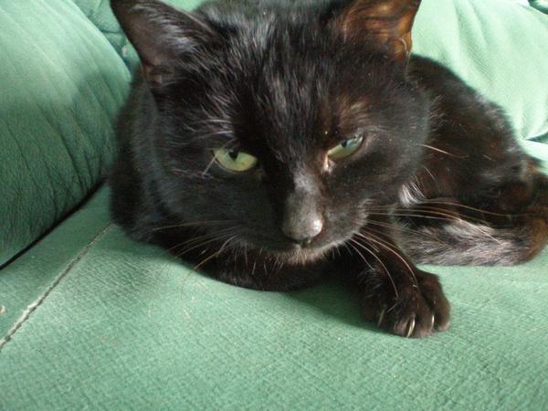 Кошка тоже путешествовала на легковых машинах. Осталась немного недовольна