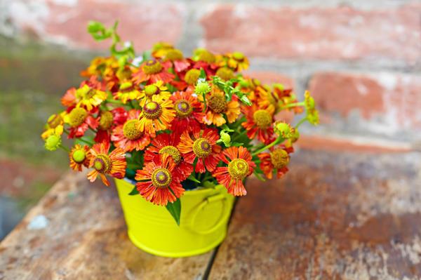 Герберы – цветы для молодых и энергичных
