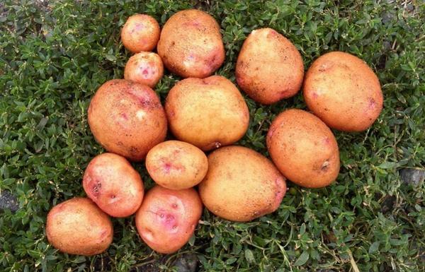 В сельской местности невозможно представить хозяйство без своего огорода
