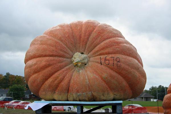 Гигантская тыква на взвешивании. Фото с сайта pumpkinfest.org