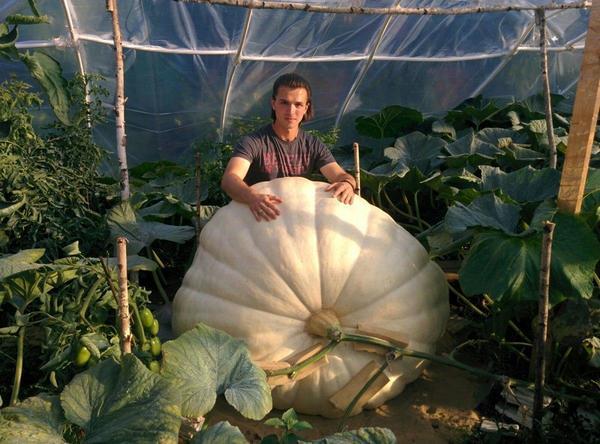 Александр Чусов со своей гигантской тыквой. Фото из блога Александра Чусова на сайте 7dach.ru