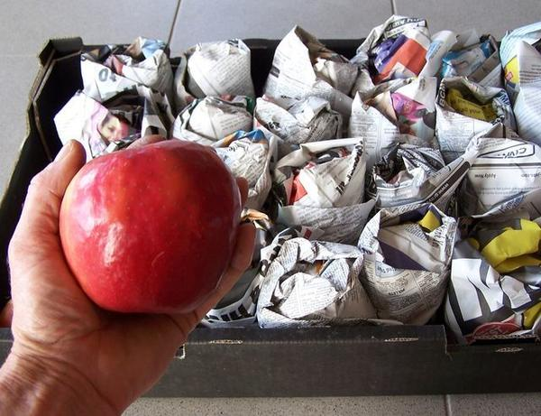 Подготовка яблок на зиму. Фото с сайта ekosad-vsem.ru