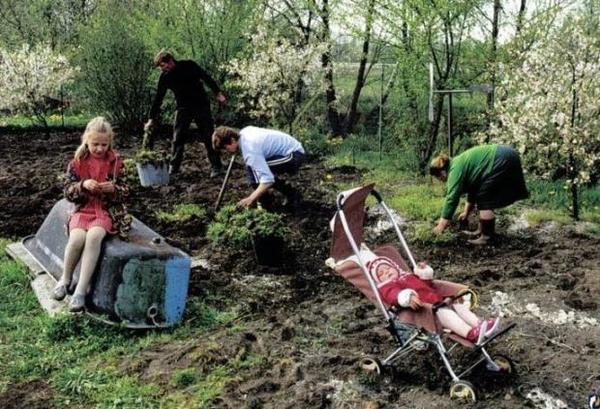 Семья на даче садит огород. Фото с сайта damex.ru