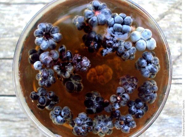 Но к концу зимы для чая остались лишь запасы дикой ежевики