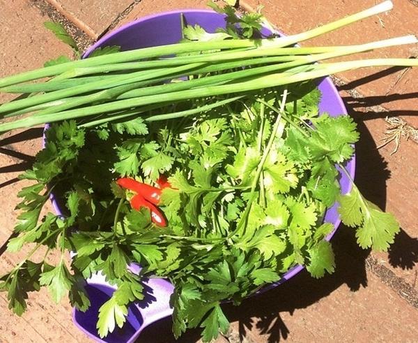 Все, что надо для чимичурри, растет у нас в огороде