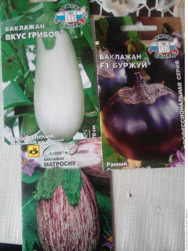 Баклажаны: Вкус грибов, Матросик, Буржуй F1