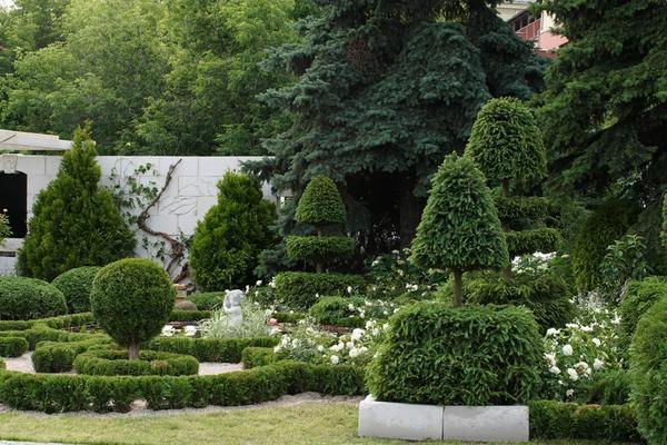 Топиарная стрижка растений украшает многие сады во всем мире