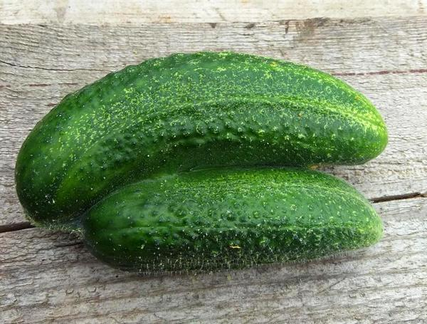 Сросшиеся плоды огурца