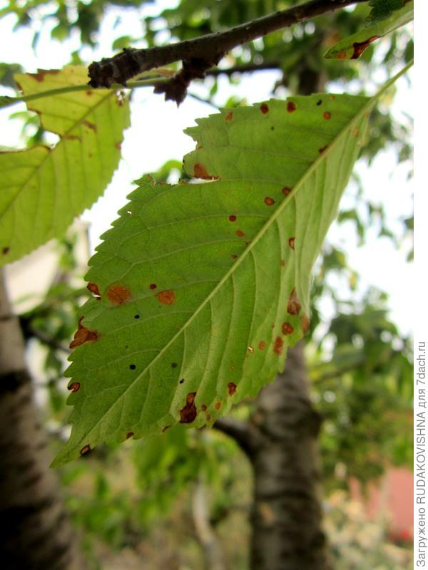 Листья на деревьях