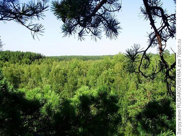 Вид на лес