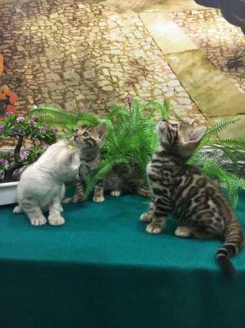 Только тут три котёнка )))