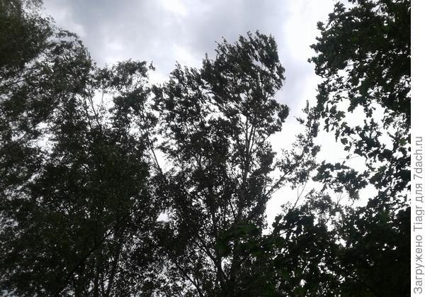 Ветви гнулись от ветра