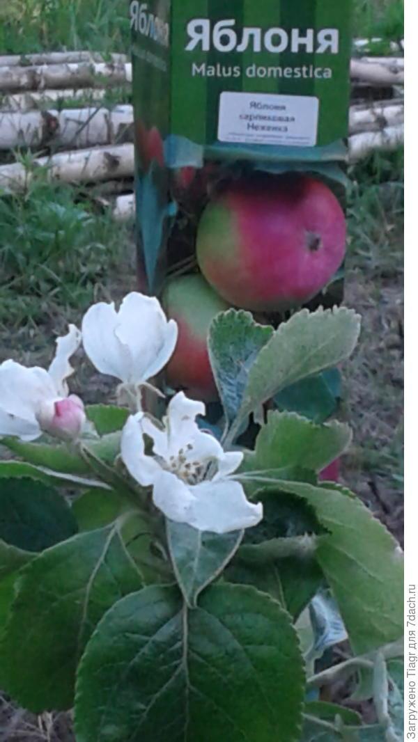 и яблони до сих пор цветут))))