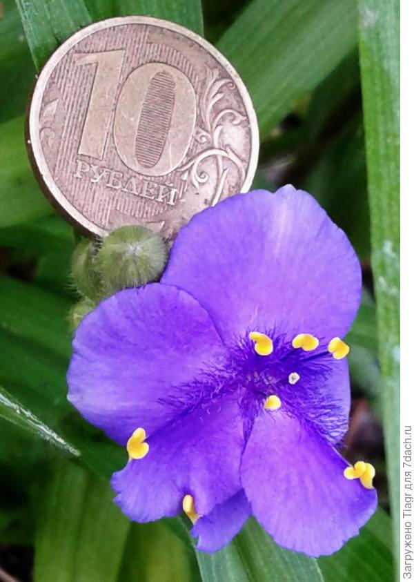Немного больше десятирублёвой монеты