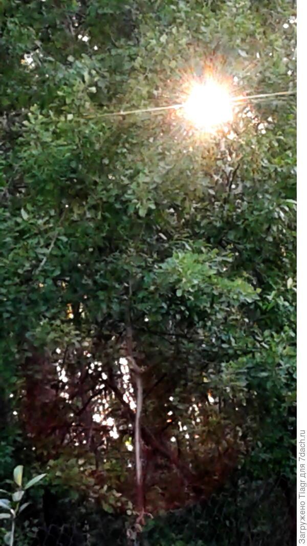 Вечер. Солнце прячется за лесом