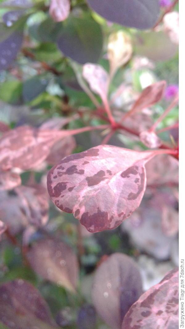 Листовая пластинка с мраморным рисунком в розово-белых тонах