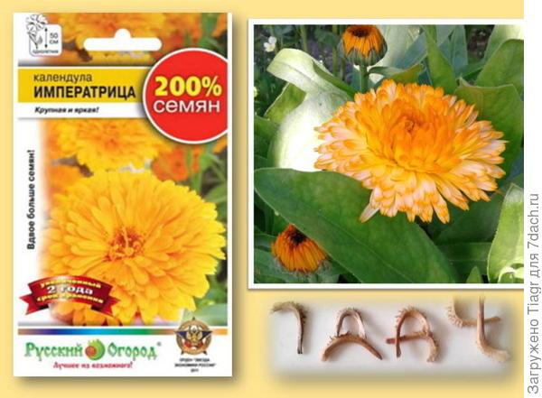 """Пакетик  с семенами. Фотография цветка календулы """"Императрицы"""" Семена. календулы."""
