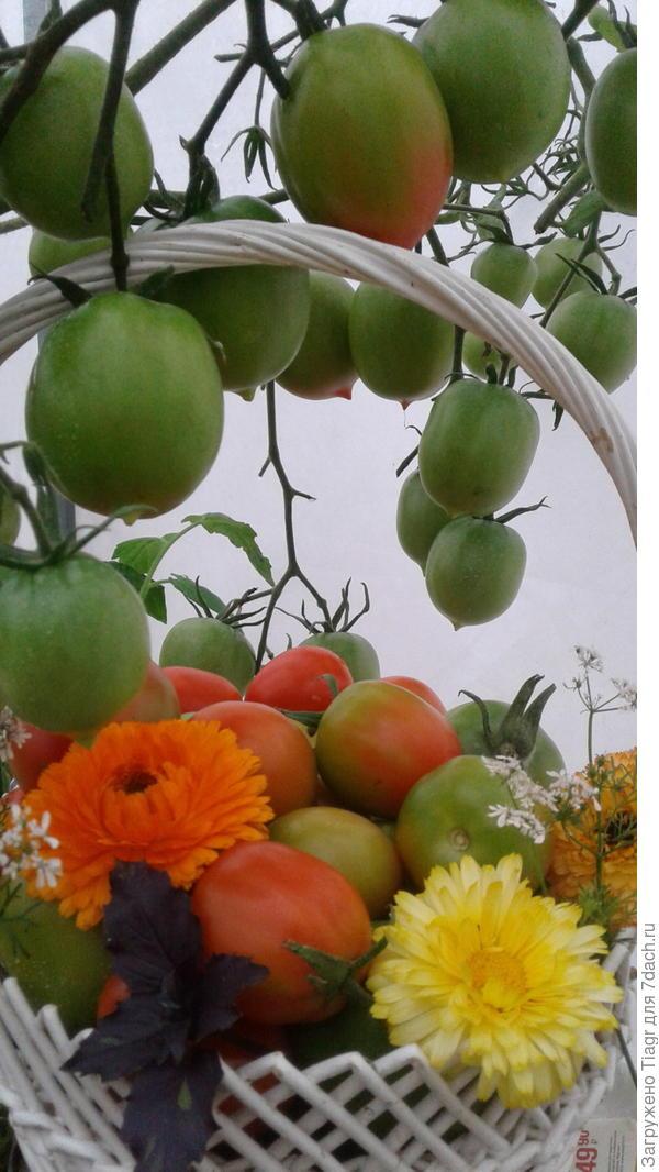 Ведь сбор урожая - всегда праздник!
