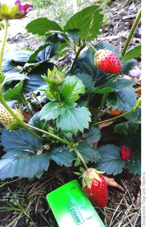 ягоды в последние выходные сентября