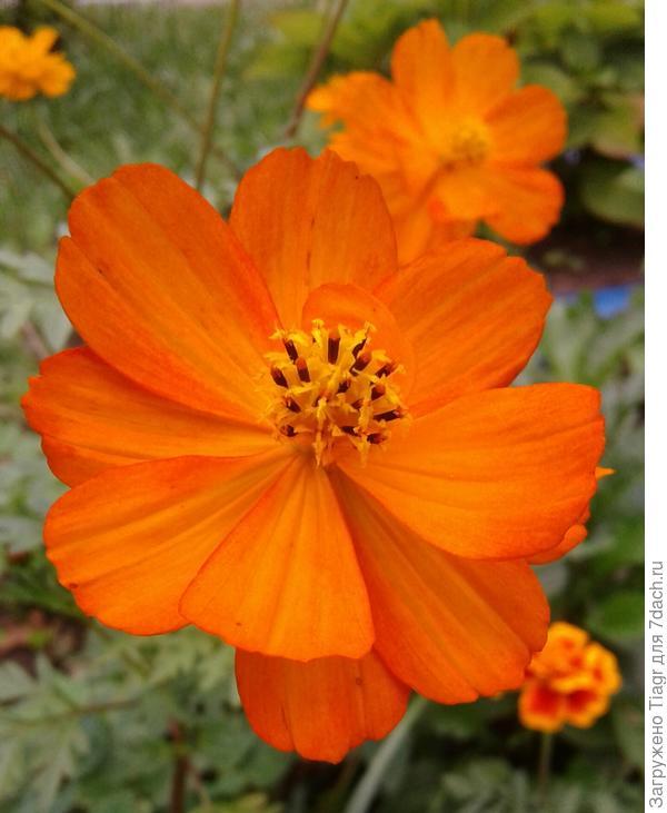 Этот цветочек вырастили дети