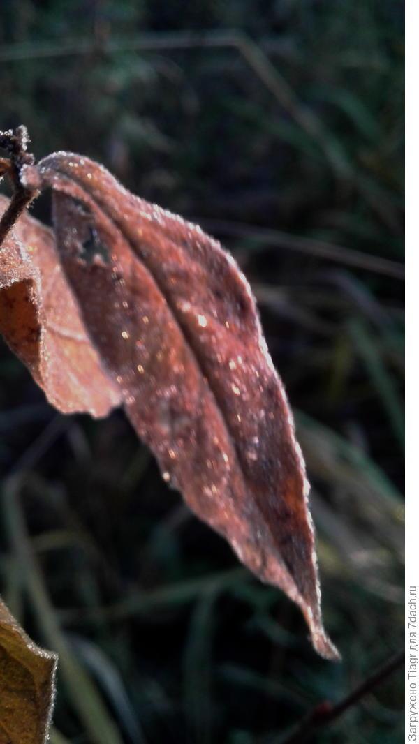 Посмотри, листок усыпан стразами)))