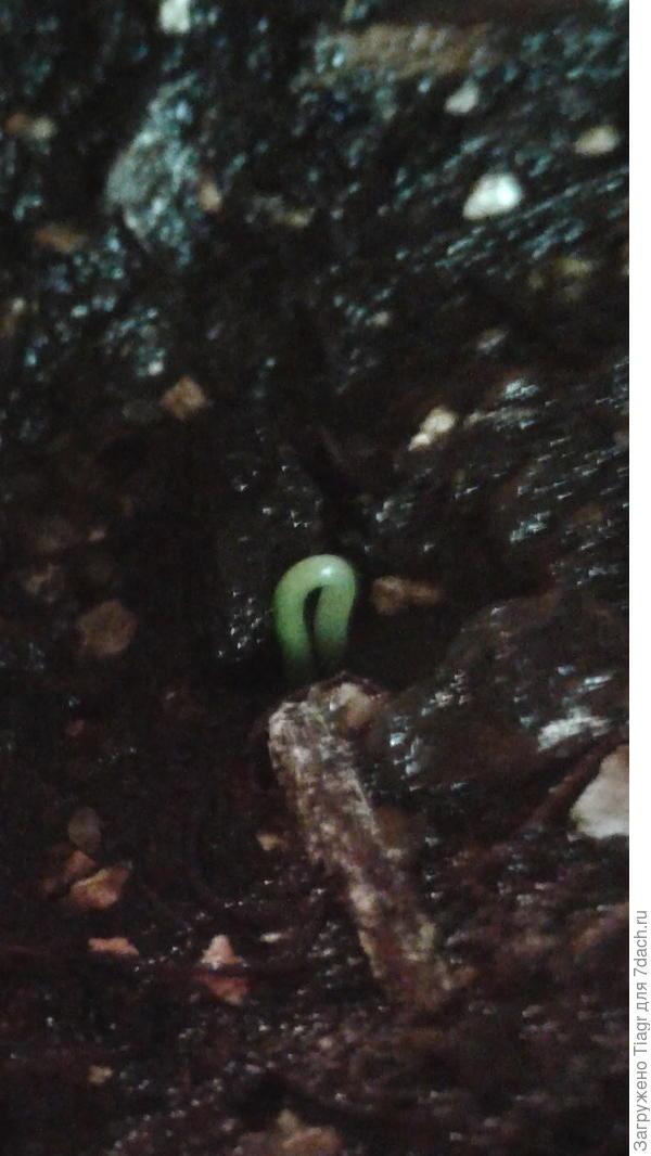 начало жизни ёлочки