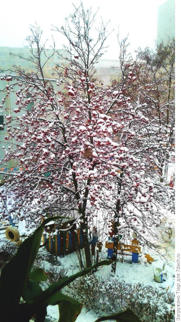 Вчера в Подмосковье выпал снег