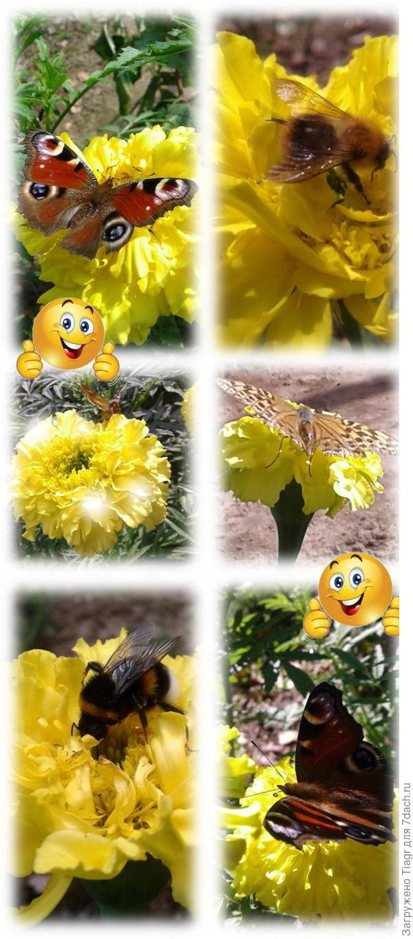 Эти бабочки капусту не едят)))