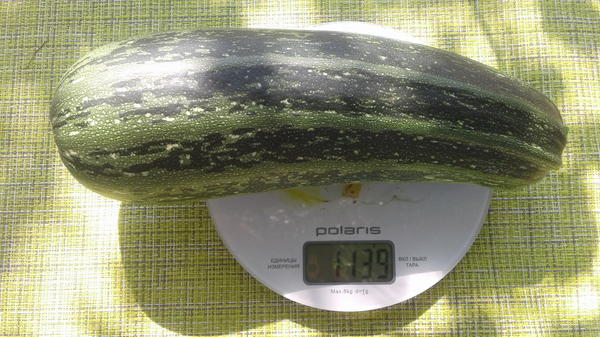 Вес плода 1139 г