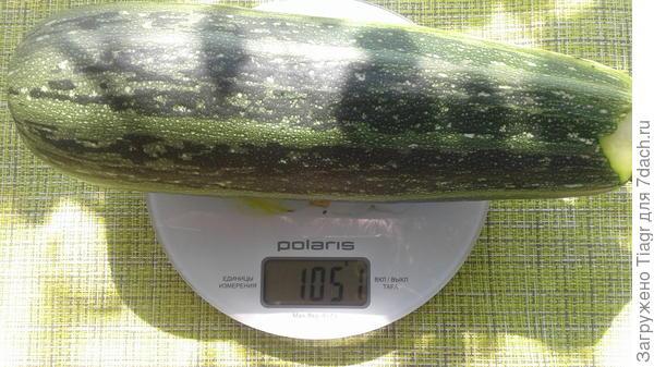 Вес плода 1051 г