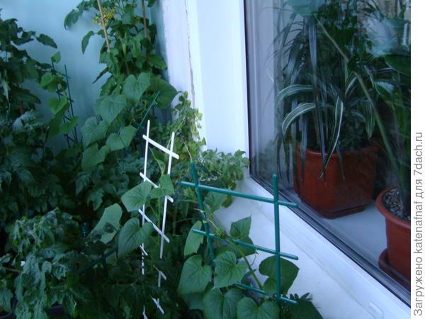 Вон Балконное чудо у дальней стенки в начале лета
