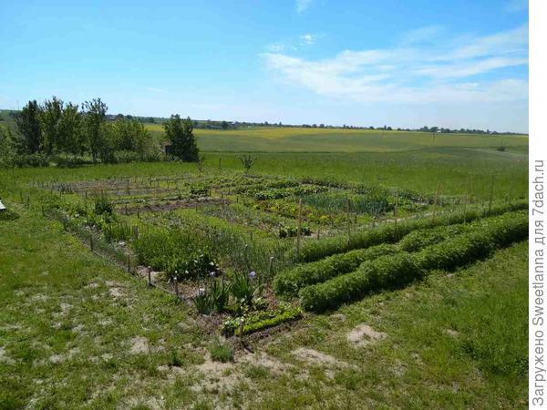 А таким был огород был прошлой весной