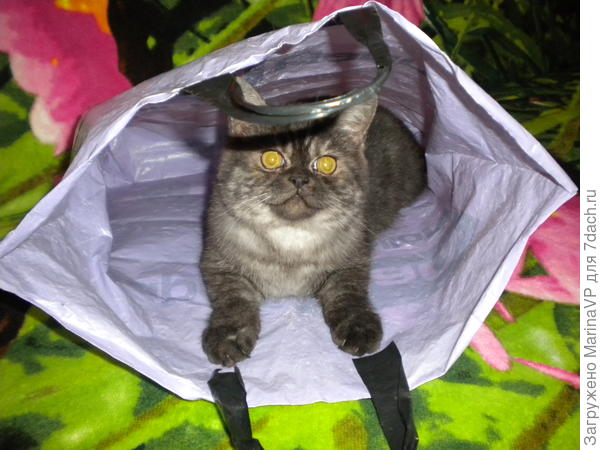Любит пакетики, посидеть там подумать.