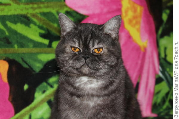Здесь ему год. Фотографировала на ветеринарный паспорт.
