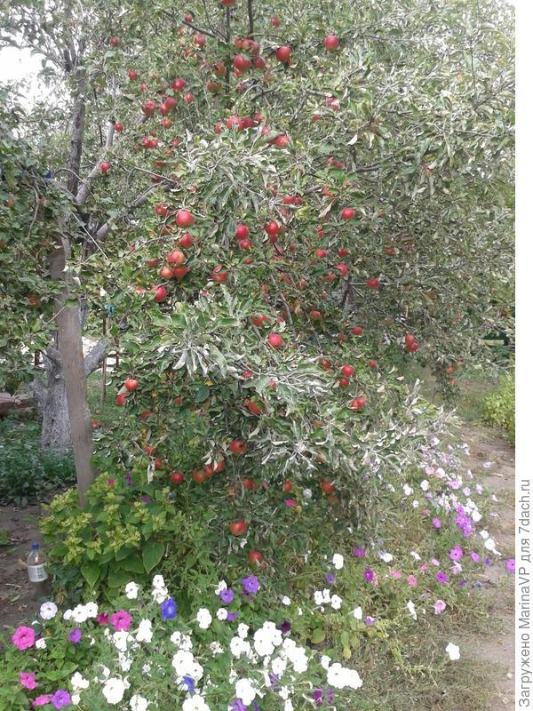 А здесь и яблочки, и цветочки!