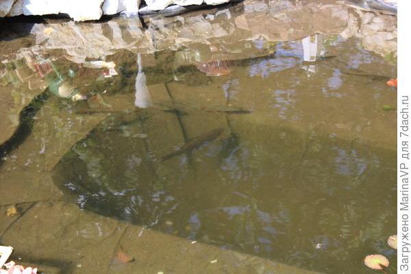 Обитатели пруда.Рыбки.