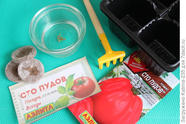 9 марта было мной посажено 12 семечек томата Сто Пудов, это для меня лидер наверное) 2 в Джиффи и 10 в грунте, по скольку опыт в выращивании данного томата есть, верю в них_)