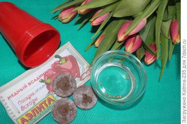 9 марта высажено 9 семечек перца Медный всадник, спустя 11 дней видим след картинку↓