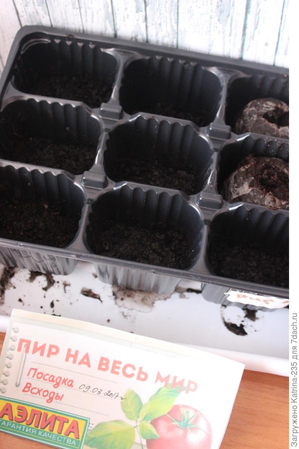 9 марта было высажено мной 9 семечек томата Пир на весь мир, 7 грунт и 2 в Джиффи, через 11 дней имеет след картинку↓