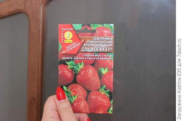 Земляника ремонтантная крупноплодная от Аэлиты почему то захотела,чтоб я ее проращивала)Связи с тестированием овощей нет, ягода только этой фирмы в продаже, вот и взяла почему то этот сорт. в пакете 21 семечко