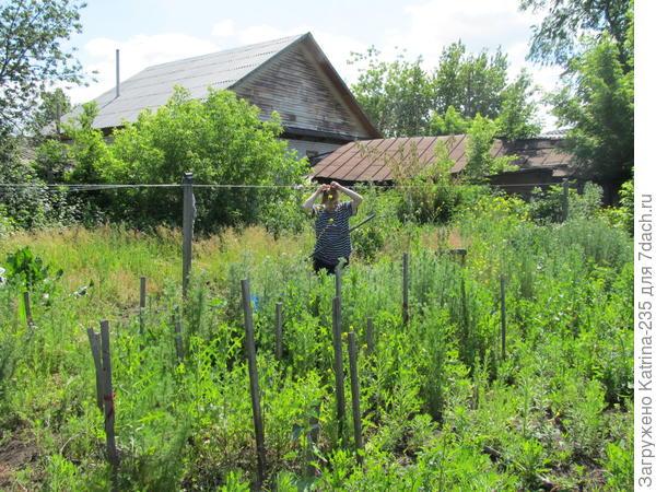 вот так у нас все было зелено-зелено) в таких зарослях хозяйка каким то образом еще томаты садила)))