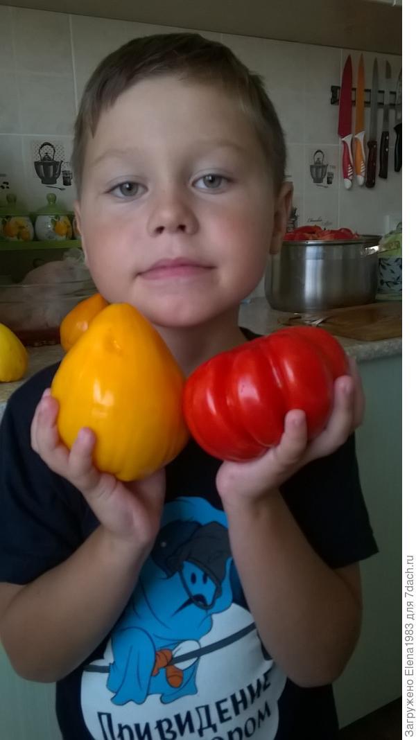 томаты Лискин нос и Лотарингская красавица